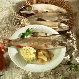 Fisch-Informationszentrum e.V.