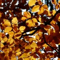 Mecklenburgische Seenplatte im Herbst