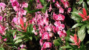 Blumenhalle Internationale Grüne Woche